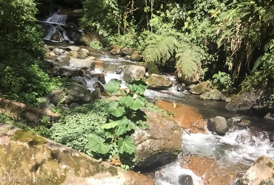 Quetzal Trail in Boquete Panama