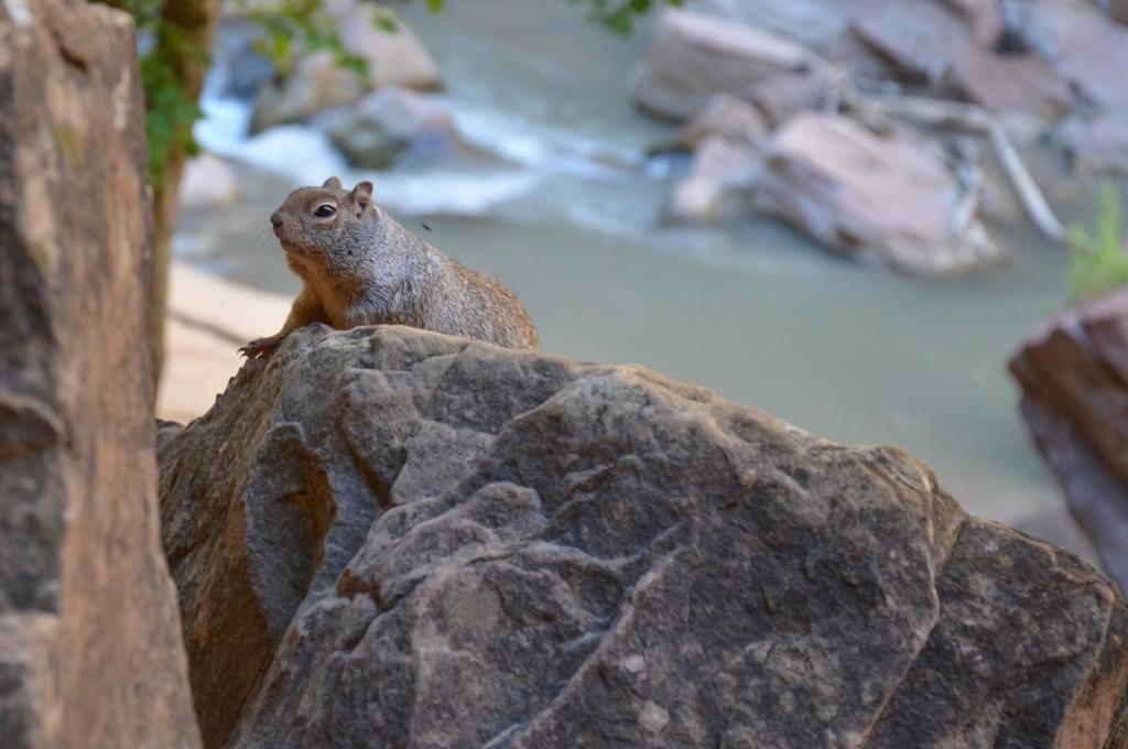 99Journeys Reise-Blog Reisetipps Reiseberichte Insider Tipps - USA Westküste Zion Nationalpark