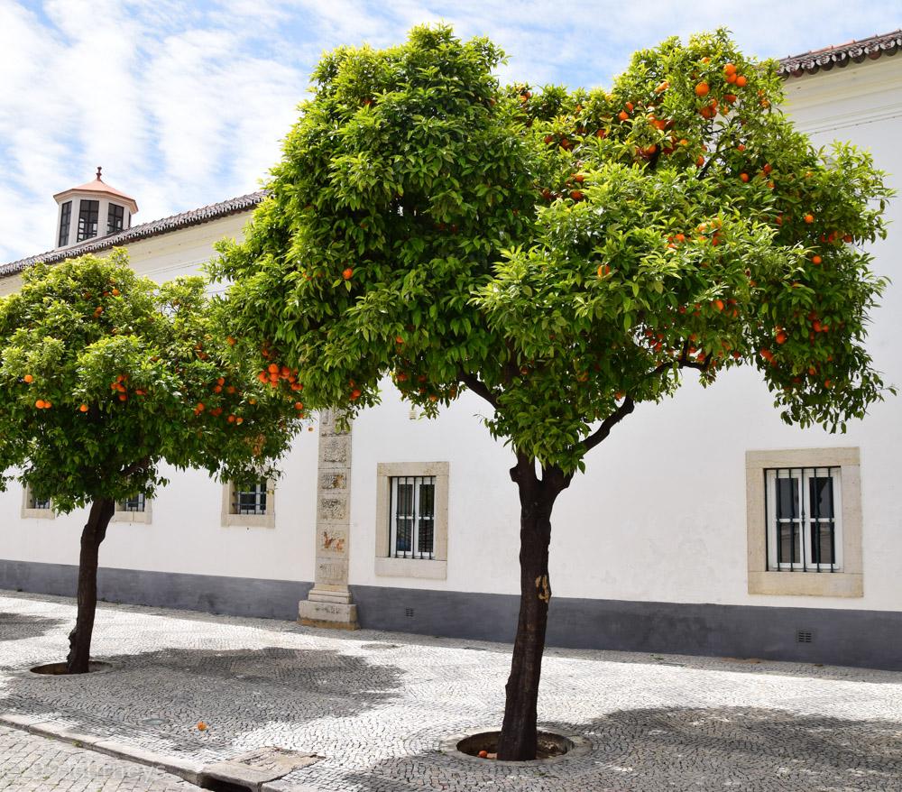 Reisetipps Portugal Lissabon Algarve-95
