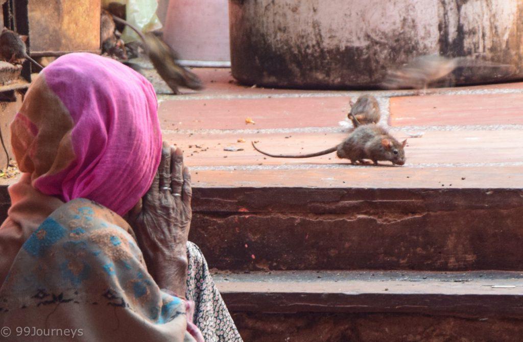 Reisetipps und Reiseberichte Indien - Rajasthan - Bikaner Deshnok
