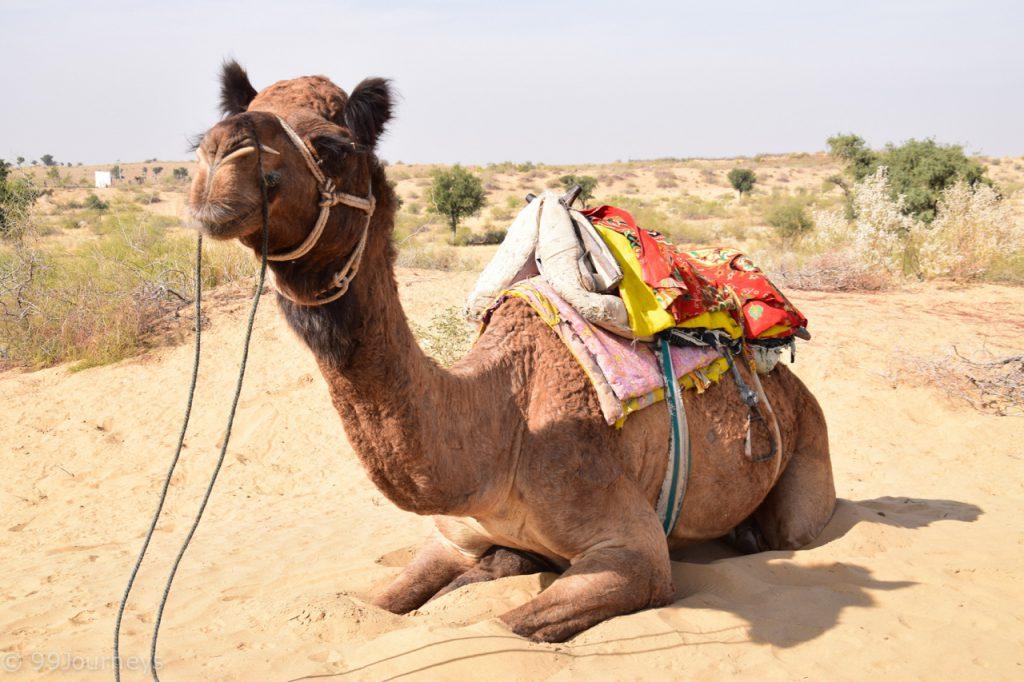 Reisetipps-und-Reiseberichte-Indien-Rajasthan Bikaner