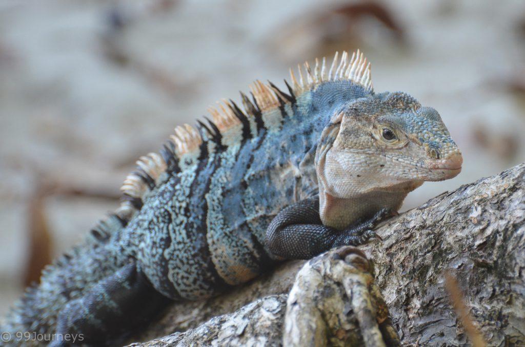 Costa Rica Rundreise Blog Manuel Antonio Nationalpark