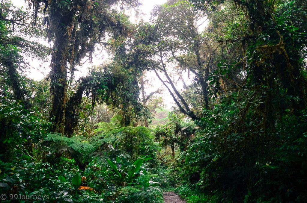 Costa Rica Rundreise Monteverde